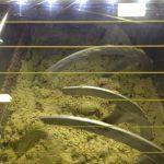 Модифицированная атмосфера во время процесса извлечения оливкового масла