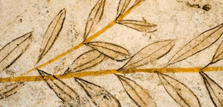 Оливковое масло в истории человечества (Часть I)